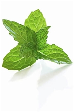 10 ml Eucalyptus with Mint Flavoring (IW)
