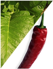 Tabacco Hot Spices Flavor