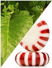 10 ml Tabacco Peppermint Flavoring (IW)